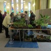 Spring & Plant Fair 2017